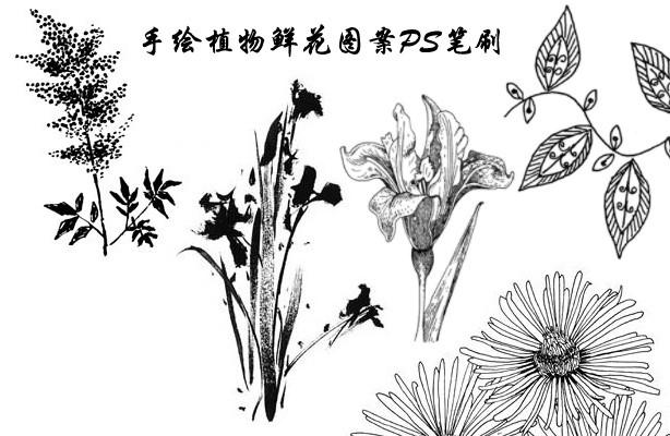 手绘植物鲜花图案ps笔刷