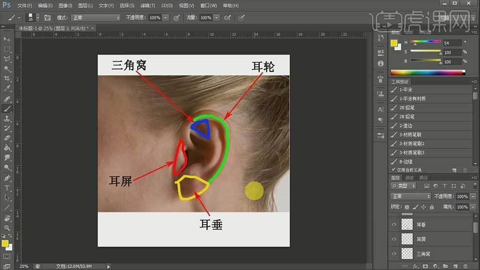 ps-耳朵结构-cg五官解析