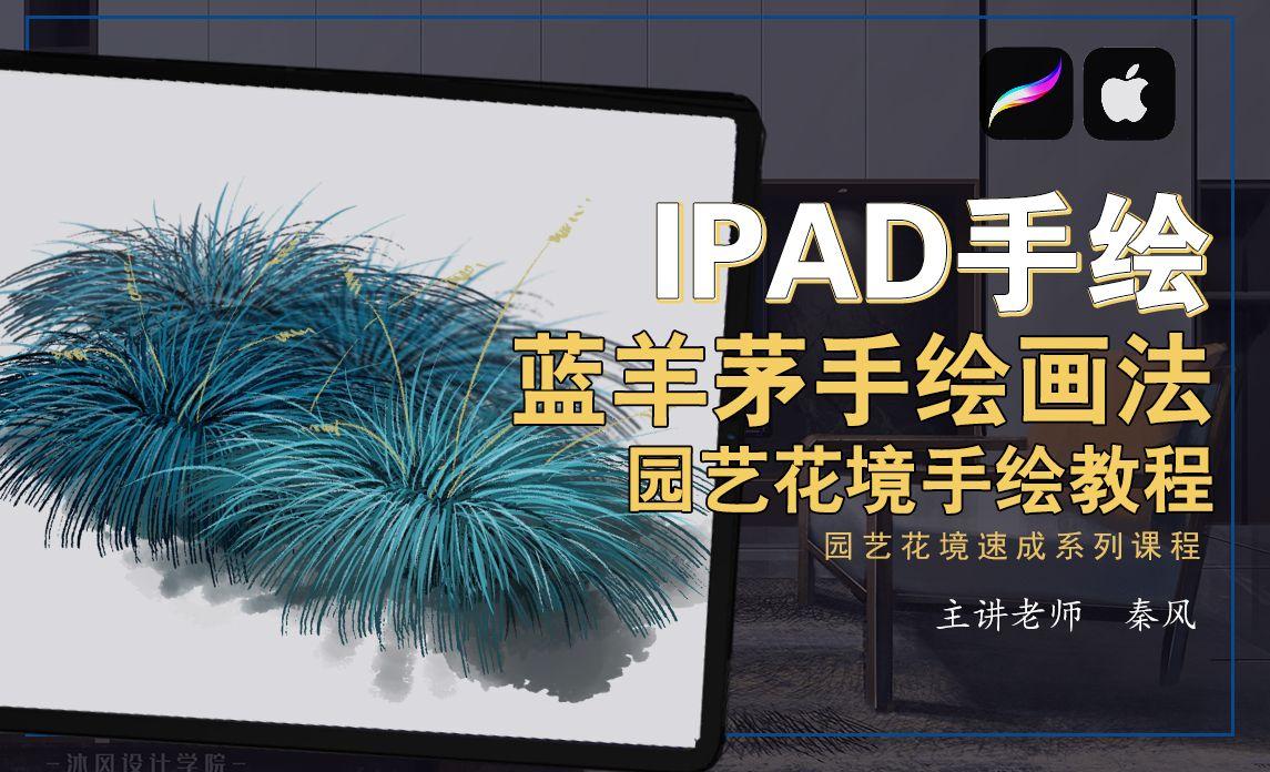 IPad+procreate-园艺花境手绘教程—蓝羊茅画法