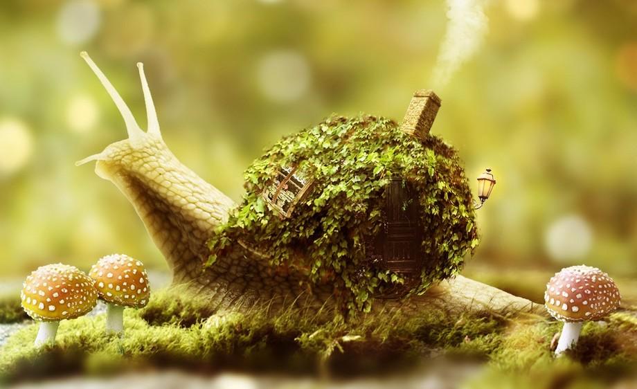 PS-蜗牛的移动房间·清新