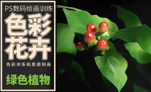 PS-板绘-色彩静物-绿色植物
