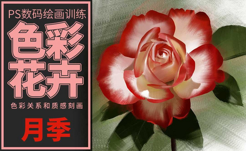 PS-板绘-色彩花卉-月季