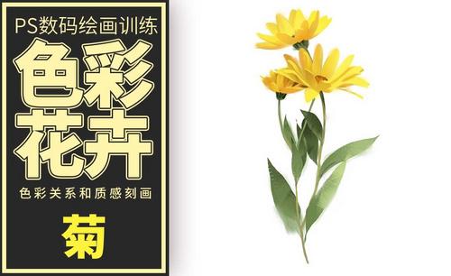 PS-板绘-色彩花卉-菊