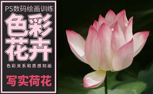 PS-板绘-色彩花卉-荷花-写实版